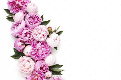Pink Peonies Collection #01