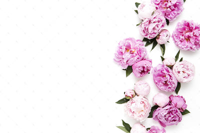Pink Peonies Collection #06