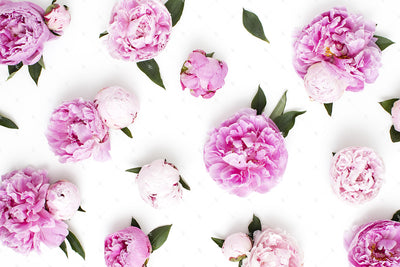Pink Peonies Collection #03