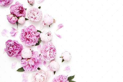 Pink Peonies Collection #09