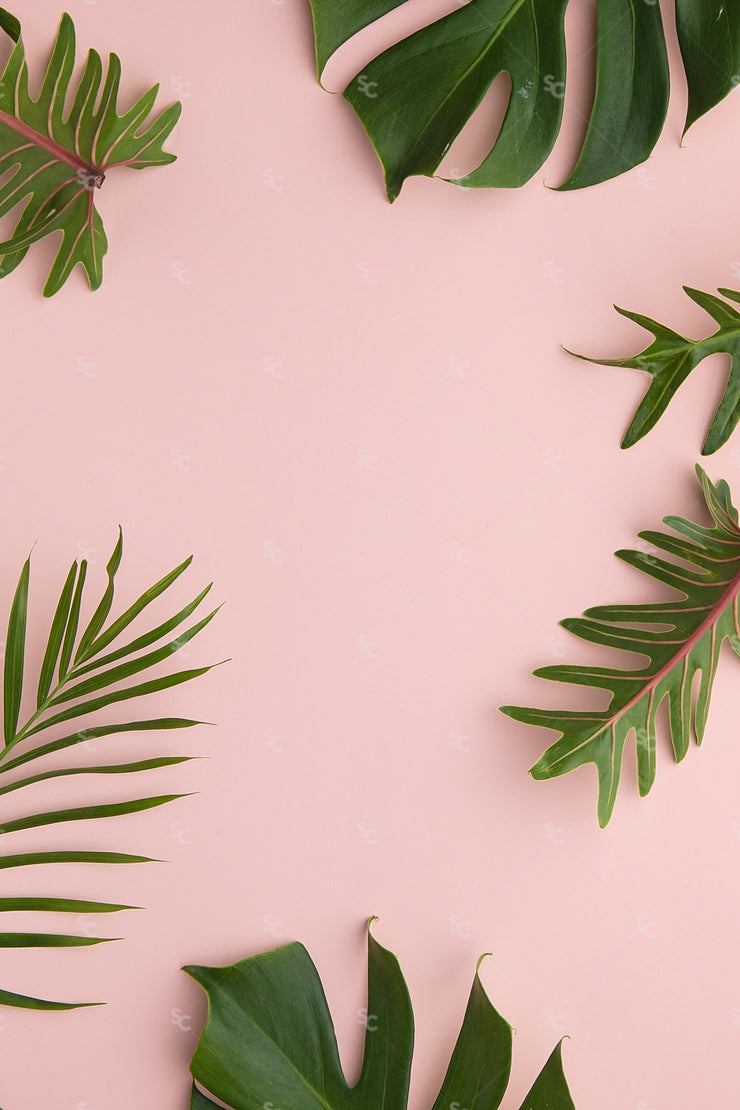 summer palms styled stock image