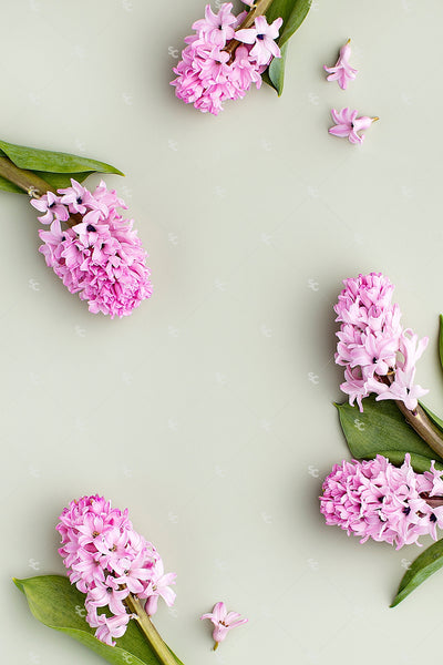 This image contains beautiful lavender and pink florals on a sage background.