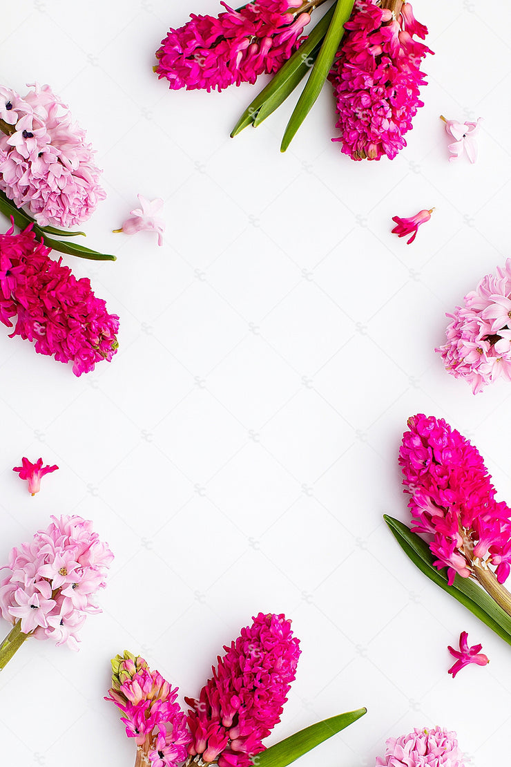 This image contains beautiful lavender and pink florals on a bright white background.