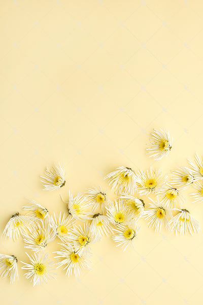 This image contains white florals on a soft yellow background.