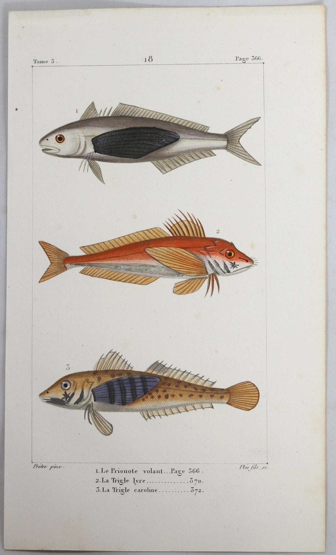 @1819 French Prêtre fish print with 3 species (Trygla..)