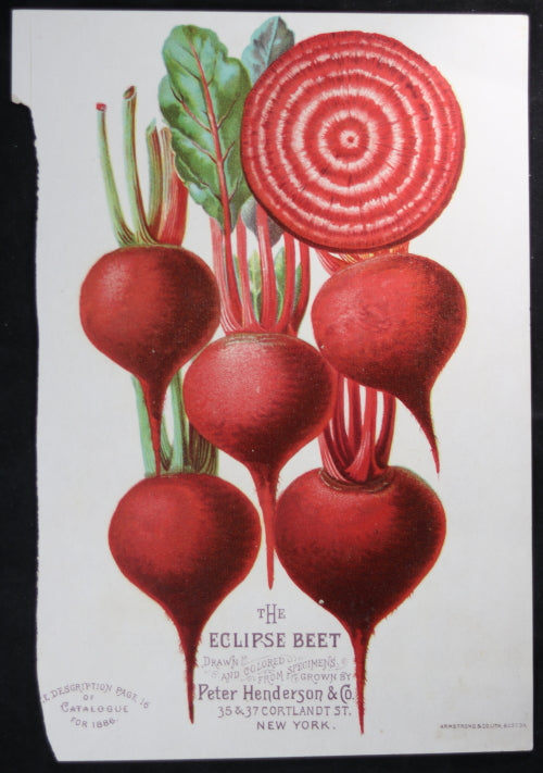 1886 print The Eclipse Beet from Henderson's catalogue (New York)