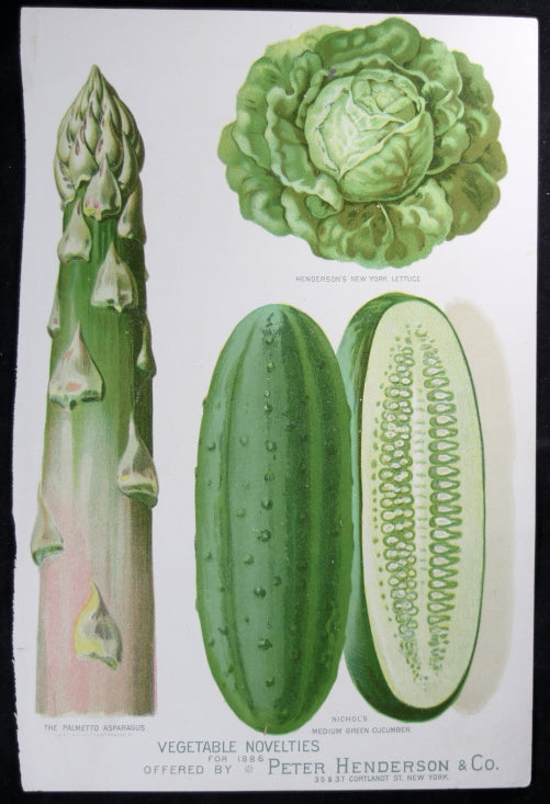 1886 print green vegetable from Henderson's catalogue (New York)