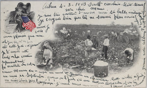 1903 postcard with photo of cotton pickers, Southern USA