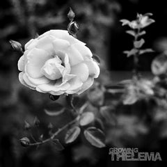 "THELEMA ""Growing"" (Cine 08) LP - Cineploit Records & Discs  - 1"