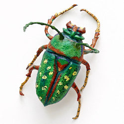 Woodland Beetle