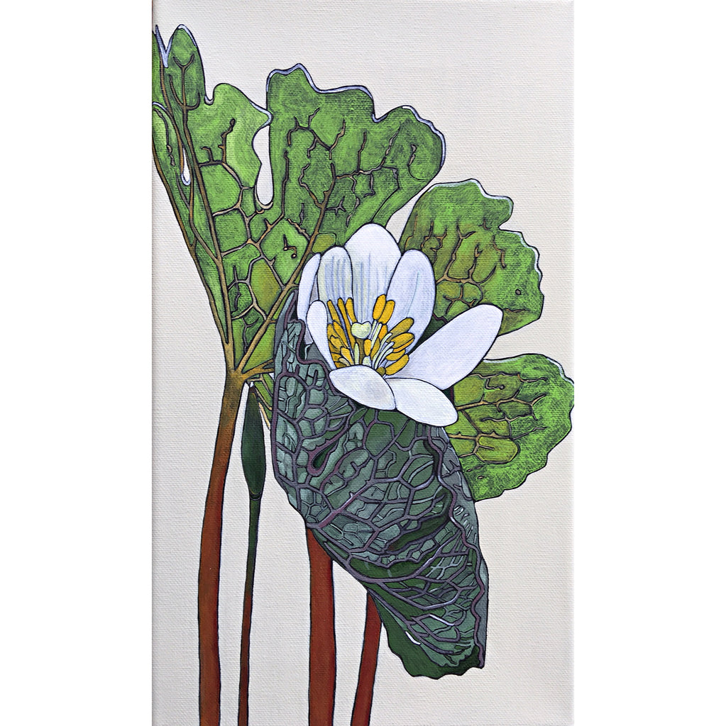 Painted Bloodroot flower and leaves by Frances Coates
