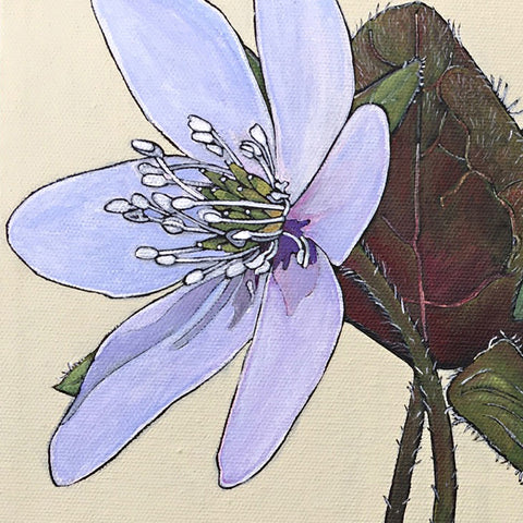 Detail of light purple hepatica flower with leaves and stem on ivory background painted by Frances Coates at Cottage Curator - Sperryville VA Art Gallery