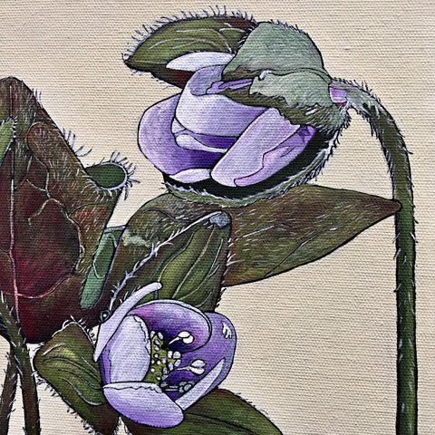 Detail of painted partially-open light purple hepatica flowers with leaves and stems by Frances Coates