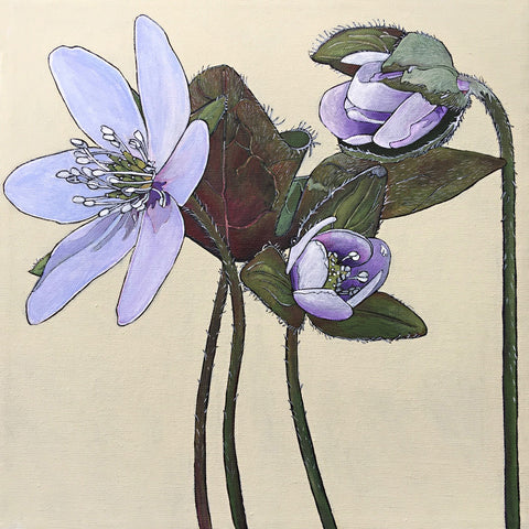 Painted light purple hepatica flowers with leaves and stems by Frances Coates at Cottage Curator - Sperryville VA Art Gallery