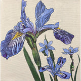 Painted purple irises by Frances Coates