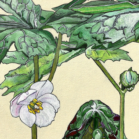 Detail of botanical painting with mayapple stages and box turtle by Frances Coates - Painting of pinxter azalea stages on white background by Frances Coates at Cottage Curator - Sperryville VA Art Gallery