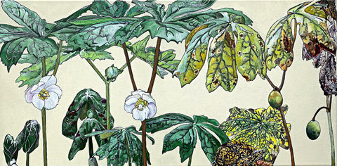 Botanical painting with mayapple stages and box turtle by Frances Coates - Painting of pinxter azalea stages on white background by Frances Coates at Cottage Curator - Sperryville VA Art Gallery