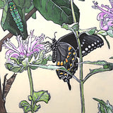 Painting of spicebush swallowtail butterflies in various stages on plants by Frances Coates at Cottage Curator - Sperryville VA Art Gallery