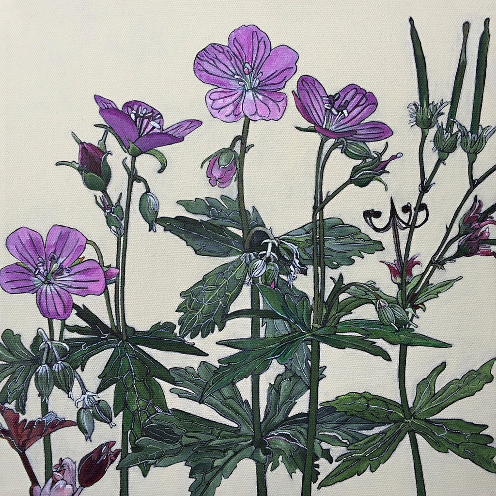 Square painting of a family of pink wild geraniums against an ivory background by artist Frances Coates at Cottage Curator - Sperryville VA Art Gallery