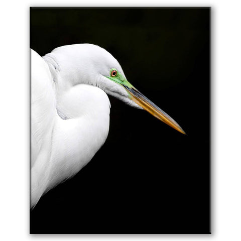 Great Egret breeding (Vertical)