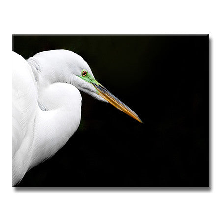 Great Egret Breeding (Horizontal)