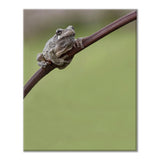 Photograph of tree frog wrapped around a branch with green background by Jackie Bailey Labovitz at Cottage Curator art gallery - Sperryville VA