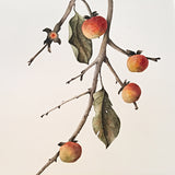 Detail of a watercolor painting of a branch with leaves and persimmons by Vicki Malone at Cottage Curator art gallery