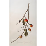 Watercolor painting of a branch with leaves and persimmons by Vicki Malone at Cottage Curator art gallery