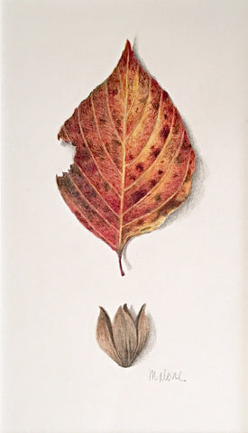Drawing of an orange and red autumn leaf by Vicki Malone at Cottage Curator art gallery