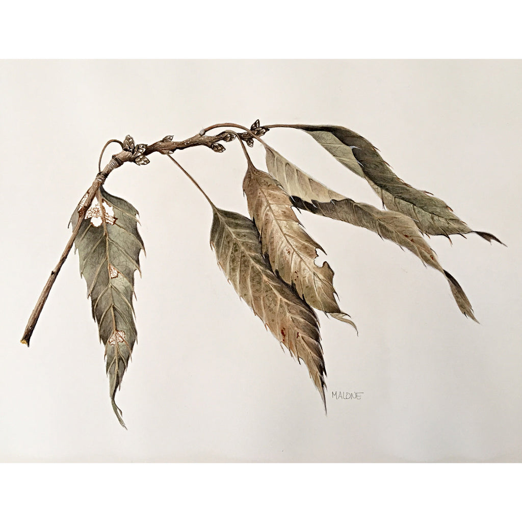 Watercolor painting of a dried branch with leaves by Vicki Malone at Cottage Curator art gallery