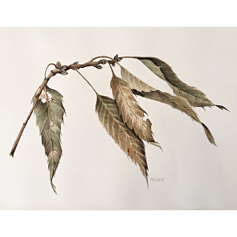 Dried Branch