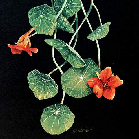 Detail of gouache painting of orange nasturtiums and leaves on a black background by artist Vicki Malone at Cottage Curator art gallery