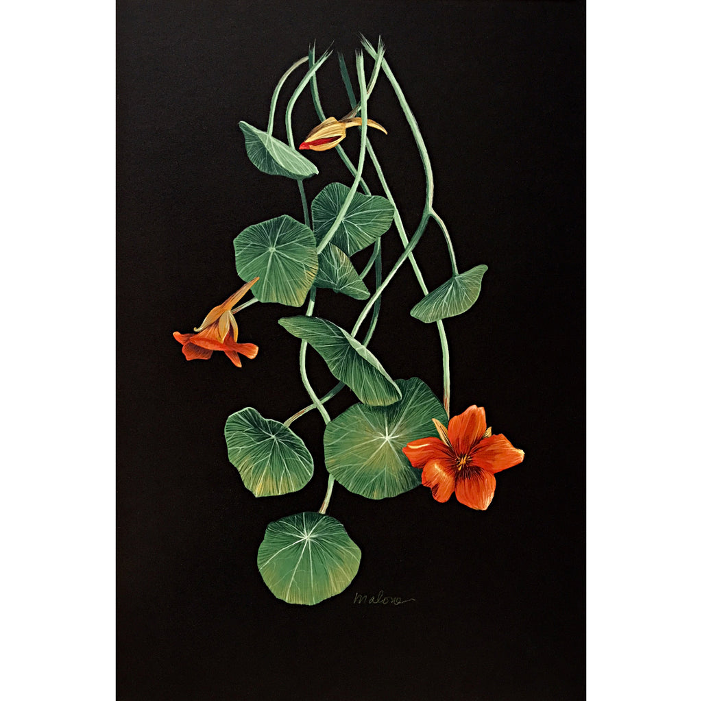 Gouache painting of orange nasturtiums and leaves on a black background by artist Vicki Malone at Cottage Curator art gallery