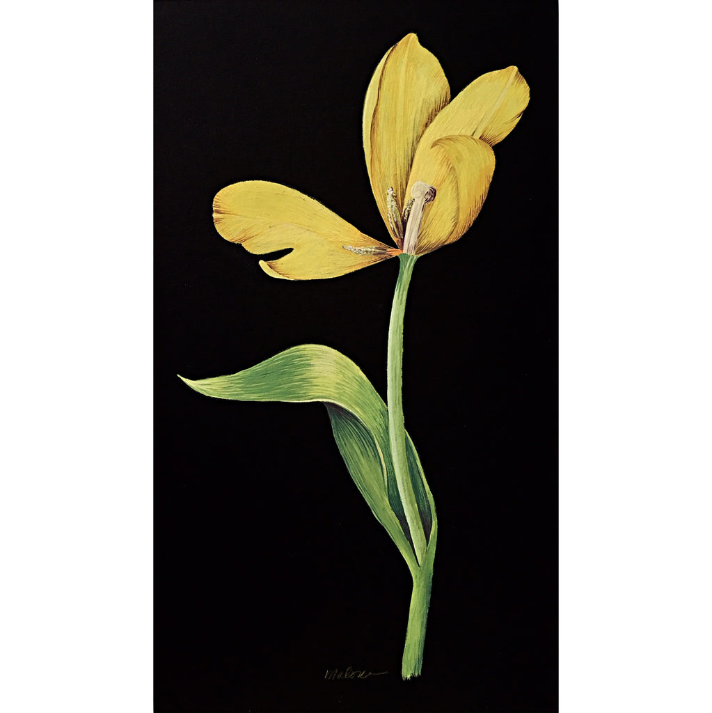 Gouache painting of yellow tulip with stem on a black background by artist Vicki Malone at Cottage Curator art gallery