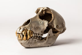 Monkey Skull (AS+AG)