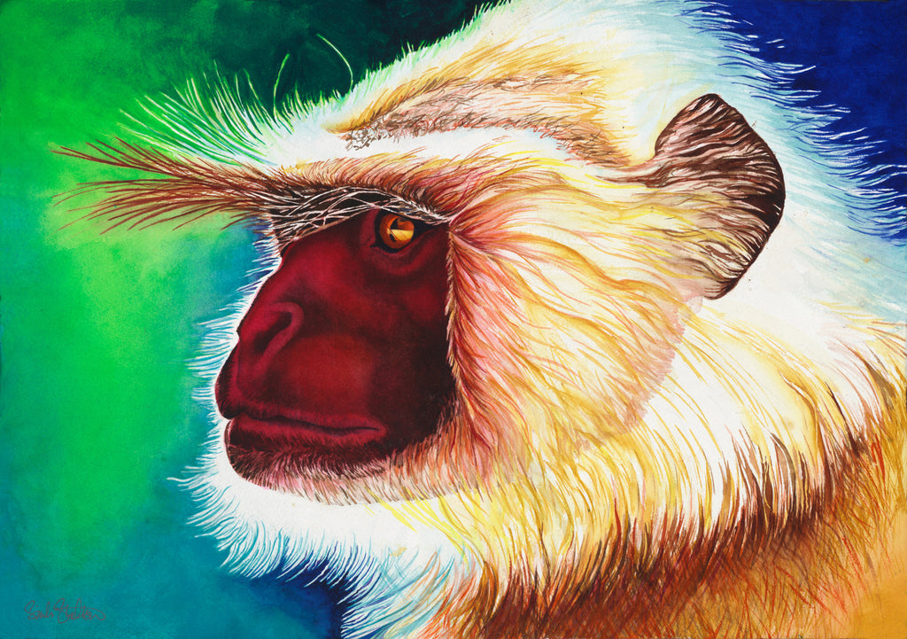 Langur:  Signed Print from original watercolor langur monkey painting.