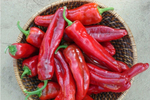 Organic Red Chili Pepper (20 Seeds)