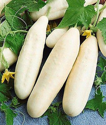 White Cucumber (20 Seeds)