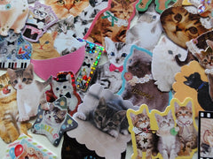 Cute Lovely Cat Kitten Flake Photo Stickers - 40 pcs