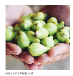 Kakadu plum benefits