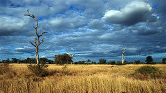 Singita_Kruger_National_Park_Landscape_2488_medium