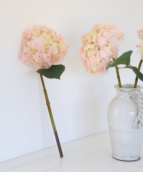 light pink hydrangea stem