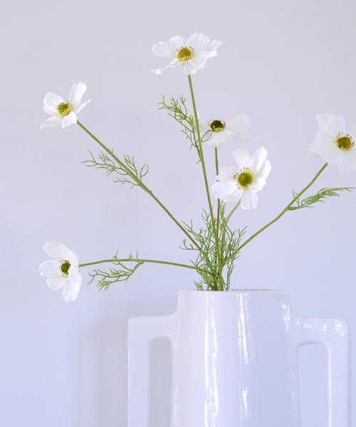 white cosmos stem