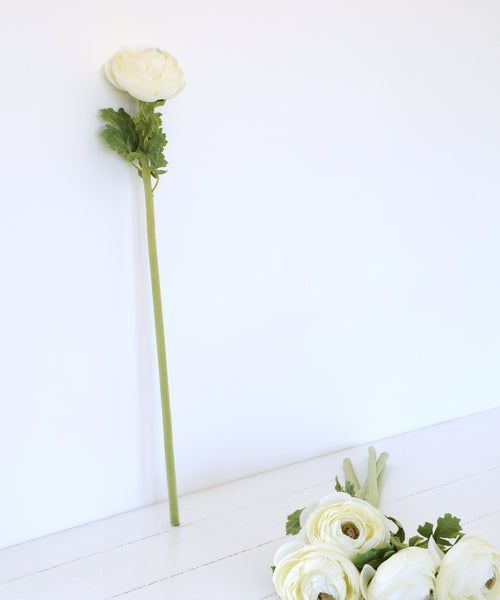white ranunculus stem