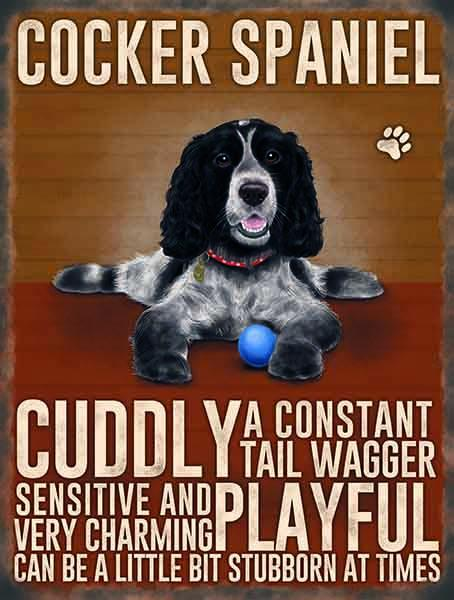 cocker spaniel metal sign nd art