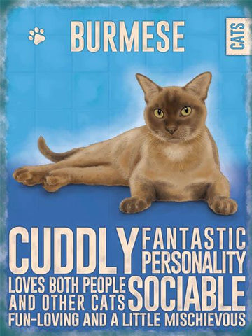 Burmese Cat Metal Sign