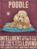 Apricot Poodle Metal Sign