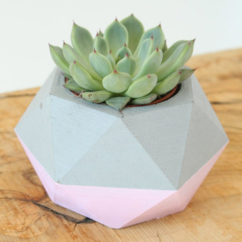 geometric concrete planter