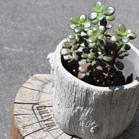 BARK PLANTER  WIDE