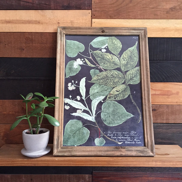 FRAMED BOTANICAL
